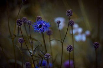 Phytothérapie : Se soigner avec les plantes